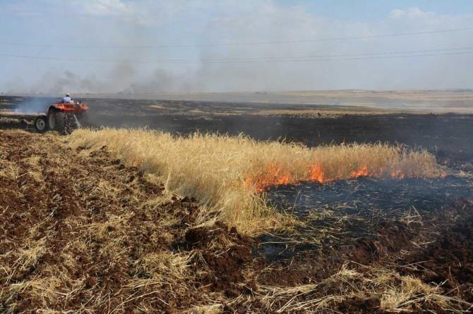 Siverek'te 400 dönüm ekili arazide yangın çıktı