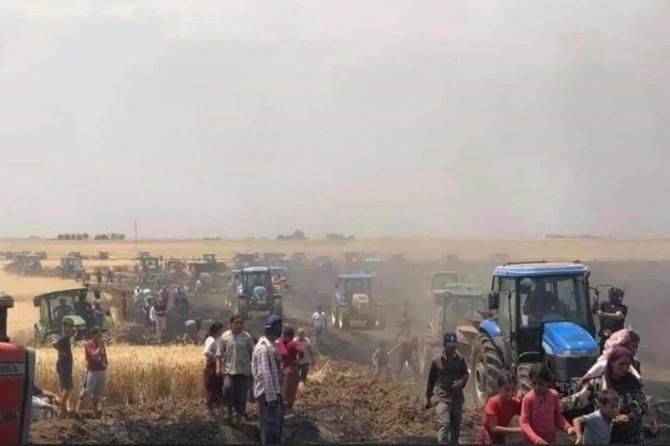 Derik'te 250 dönümlük buğday tarlası yandı