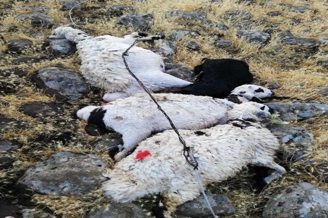 Çınar Harabe'de kopan elektrik telleri 12 küçükbaş hayvanı telef etti