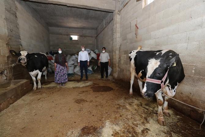 Gaziantep'te dar gelirli hayvan yetiştiricilerine destek verildi