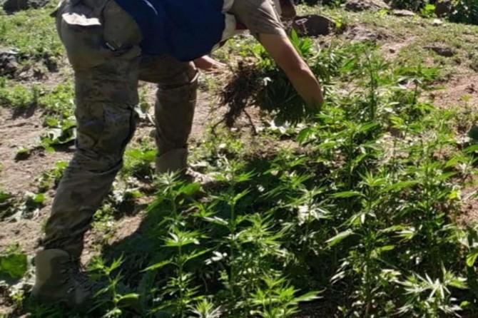 Arpaçay'da uyuşturucu operasyonunda 3 şüpheli yakalandı