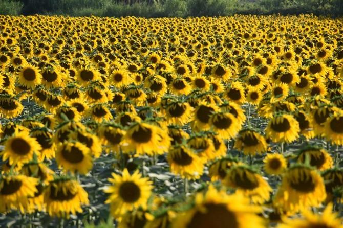 Sarı gelinliğin yüzde 12,5'i Adana'da gerçekleştiriliyor