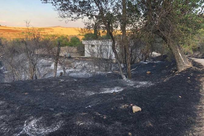 Meyve bahçesinde çıkan yangında yüzlerce ağaç kül oldu