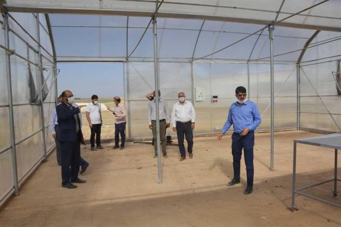 Şanlıurfa'da sera projesi istihdama ve ekonomiye katkı sunacak