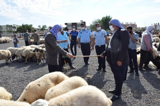 Viranşehir'de zabıta ekipleri, halk sağlığı konusunda hassas davranıyor