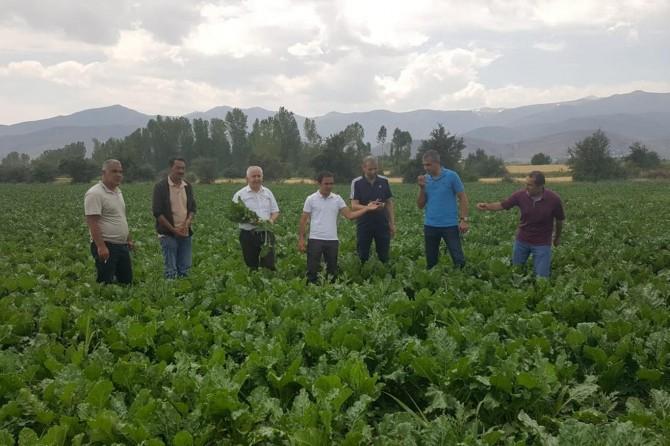 Tarım ve Orman İl Müdürü Görentaş, şeker pancarı tarlalarını gezdi