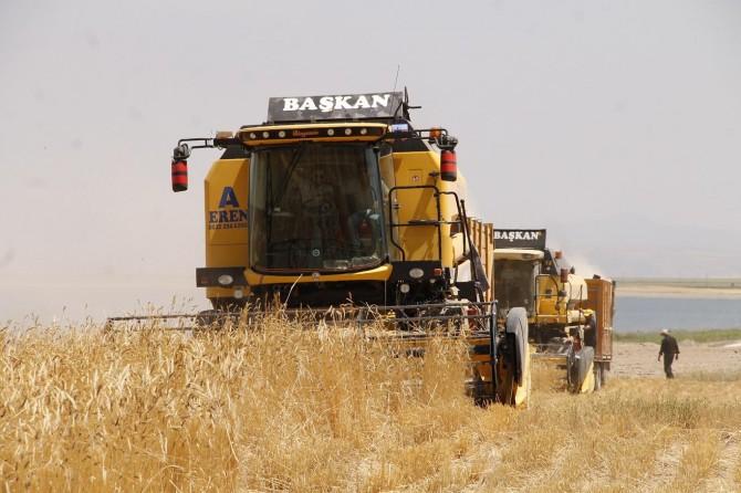Ahlat tarım Havzası'nda bereketli buğday hasadına başlandı