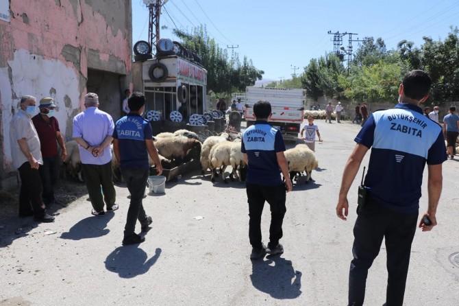 Van'da kurbanlık satışı ve seyyar denetimi