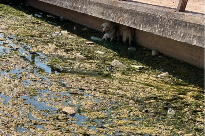 Nusaybin'de su kanalında mahsur kalan 2 köpek kurtarıldı