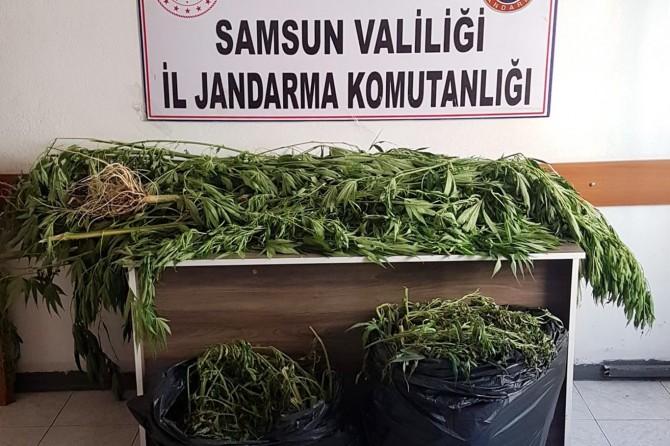 Samsun'da uyuşturucu operasyonu: 12 gözaltı