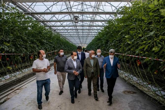 Van'dan Antalya'ya domates sevkiyatı gerçekleştirildi