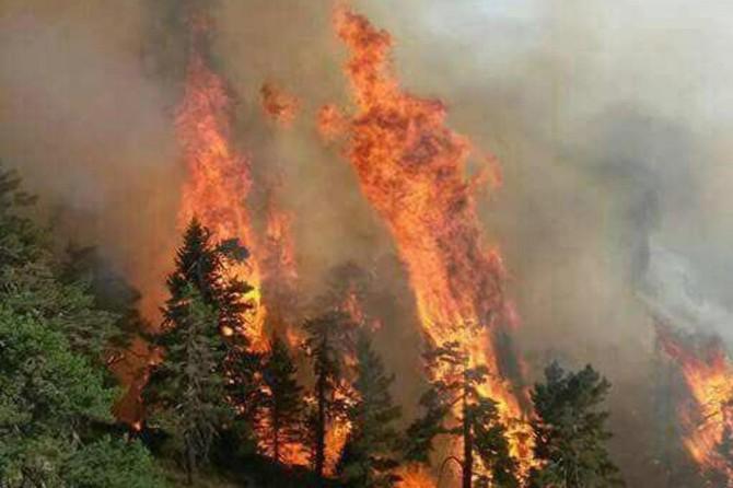 Bulgaristan-Türkiye sınırındaki yangın 5 günün ardından söndürüldü