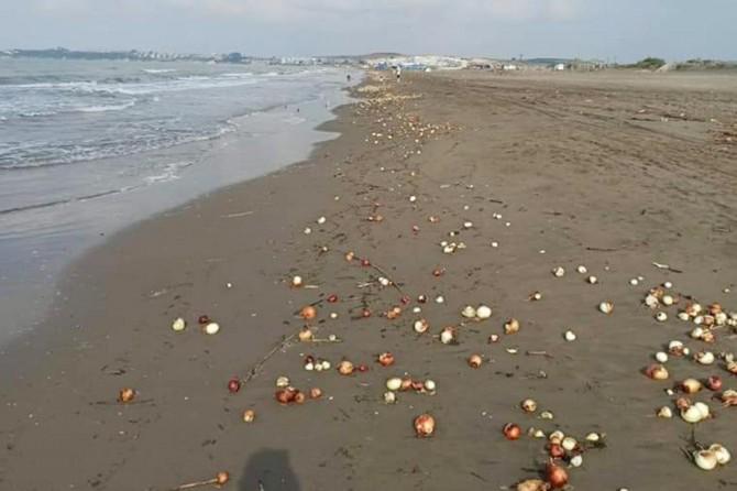 Adana Karataş'ta yüzlerce kilo soğan sahile vurdu