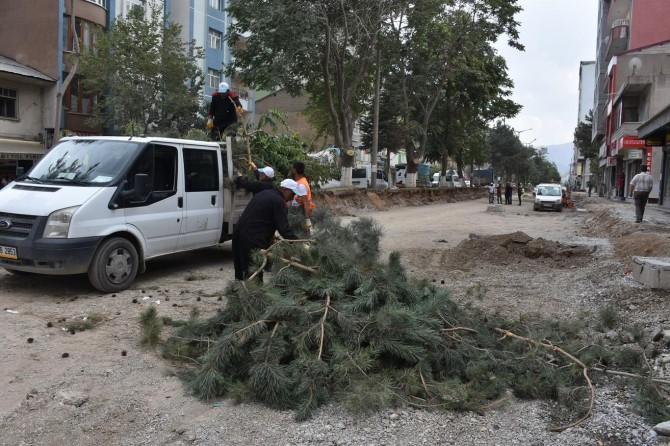 Tatvan'da cadde üzerinde bulunan ve devrilme tehlikesi olan ağaçlar kesildi