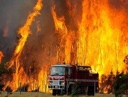 40 yılın en büyük orman yangını