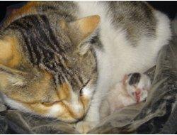 Hatay'ın İskenderun ilçesinde bir kedi ikiyüzlü olarak dünyaya gözlerini açtı