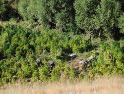 Diyarbakır'da Uyuşturucu Baskınları