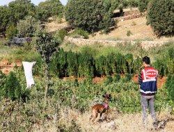 Diyarbakır'da 520 kilo esrar ele geçirildi