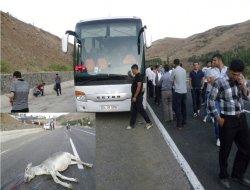 Başıboş hayvanlar kazaya neden oluyor