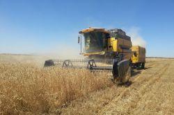 Ergani'de buğday çiftçinin yüzünü güldürdü
