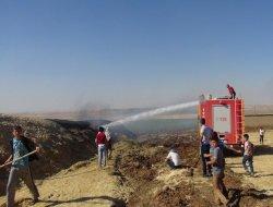 Çınarda korkutan saman yangını video-foto