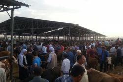 Ergani'de kurbanlıklar görücüye çıktı