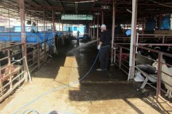Kahramanmaraş'ta hayvan pazarı tedbir amaçlı kapatıldı