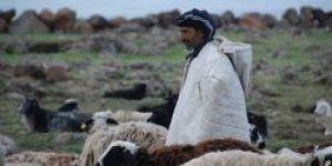 Zor ve zevkli meslek: Çobanlık