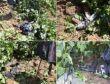 Lice'nin Yalaza köyü kırsalında 2 PKK'li öldürüldü foto