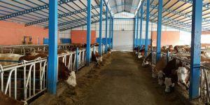 Sütünü satamayan yetiştiriciler zor günler yaşıyor