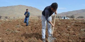 Çiftçiler fıstık ekimine devam ediyor
