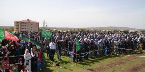 2017 Mardin Derik Subaşı köyü kutlu doğum etkinliği video foto