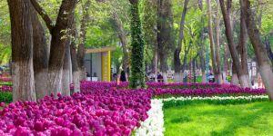 Gaziantep'e 3 milyon lale dikildi