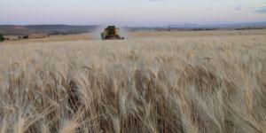 Tahıl ürünleri üretim miktarının artması bekleniyor