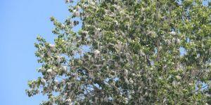 Uzmanlardan polenlerden korunma yöntemleri