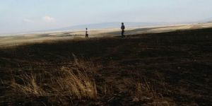 Diyarbakır Ergani'de trafodan çıkan yangın 200 dönüm buğdayı kül etti