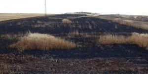 Çınar'da buğday ekili tarla kül oldu