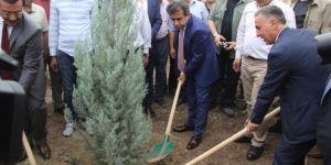 Diyarbakır'da 15 Temmuz şehitleri adına fidan dikildi