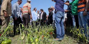 Bursa'daki dolu yağışından bin 350 çiftçi zarar gördü