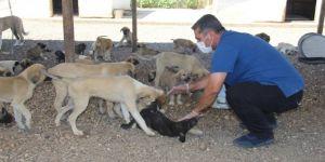 Bölgenin en büyük köpek bakım evi Diyarbakır'da
