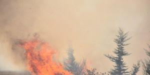 Adıyaman Kahta'da orman yangını