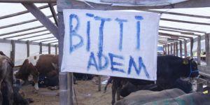 Bursa'da kurbanlıkların çoğu satıldı
