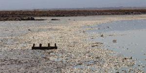 Suyu çekilen Gözegöl Göletinde binlerce balık telef oldu video foto
