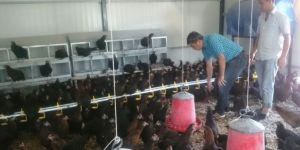 Hani'de kadın çiftçinin başarısı