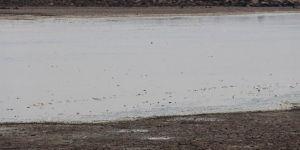 Binlerce balığın telef olduğu göletin bulunduğu köy sakinlerinden DSİ'ye çağrı