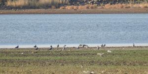 8 bin yıllık Hevsel Bahçeleri barındırdığı kuş türleriyle dikkat çekiyor