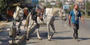 Polonya'dan Kudüs'e gitmek için 10 aydır at sırtında