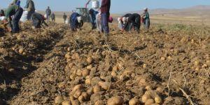 Ahlat'ta patates hasadı bereketiyle başladı