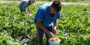 """""""Organik tarım"""" yönetmeliğinde değişiklik"""