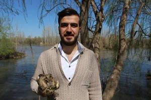 Dicle Nehri civarında yaralı baykuş bulundu